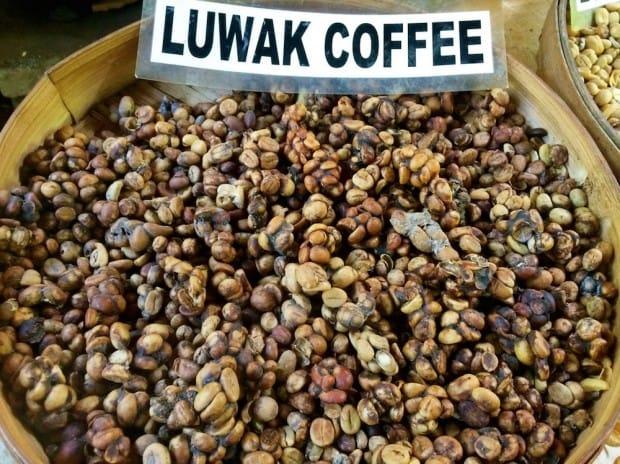kaffee-kopi-luwak-2
