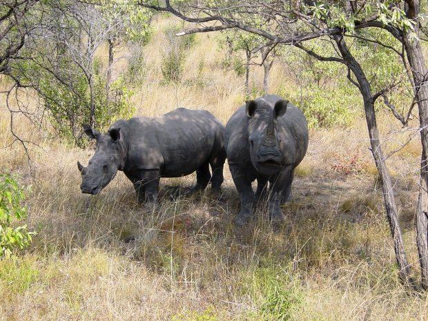 Abenteuerurlaub im Krüger-Nationalpark
