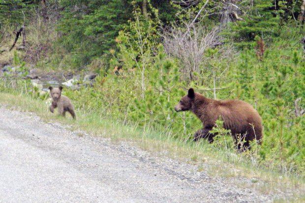 Abenteuerurlaub light: Per Roadtrip durch Kanada