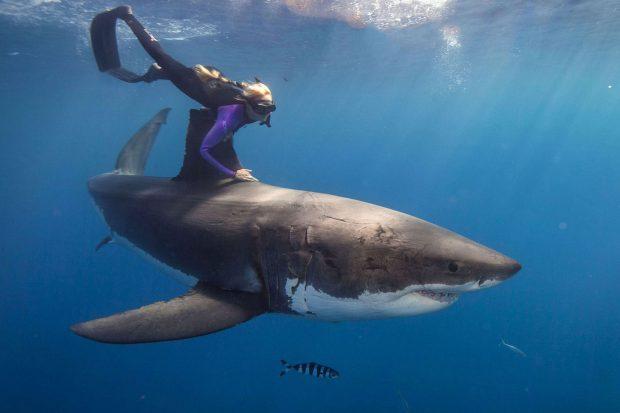 Ocean Ramsey: Das Mädchen, dass mit Haien schimmt